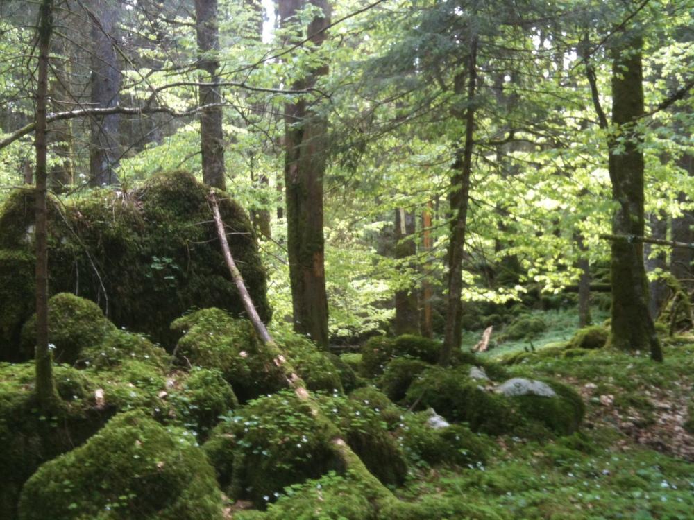 Risultati immagini per Foresta del Cansiglio paolo d'arpini